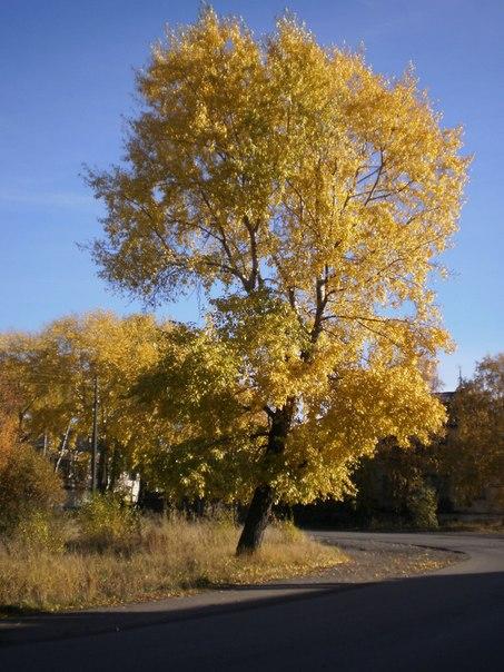 Беломорская осень. 2012 г. Автор фото Игорь Полузеров