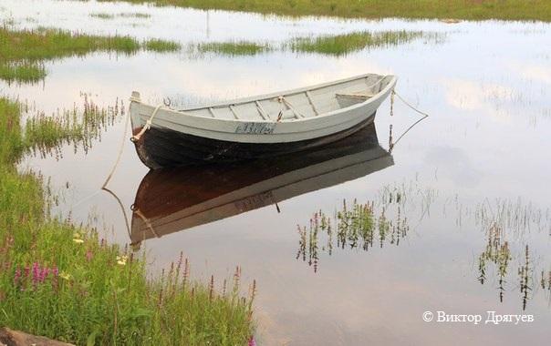 Лето в Поморье. Фото Виктора Дрягуева