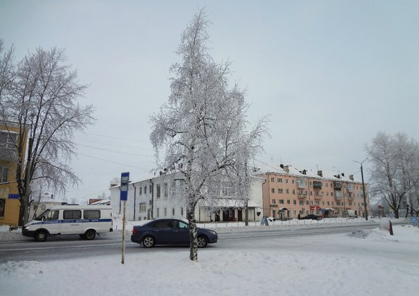 Березка. Фото Т. Каньшиевой