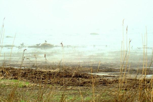 Густой туман над Белым морем. 22 мая 2014 г. Фото Т. Каньшиевой