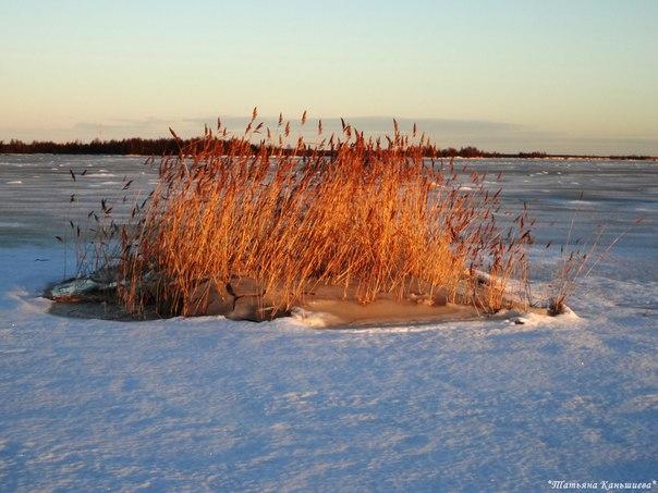 Луч солнца золотого на островке морском. Фото Т. Каньшиевой