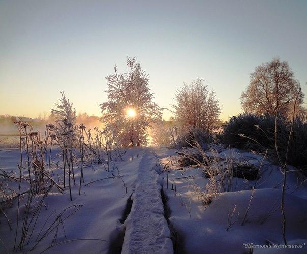 Природа Поморья. Фото Т. Каньшиевой.