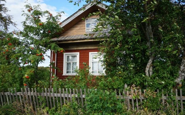 Многие дома утопают в зелени. Шуерецкое. 10 августа 2016 г. Фото С. Кошкиной