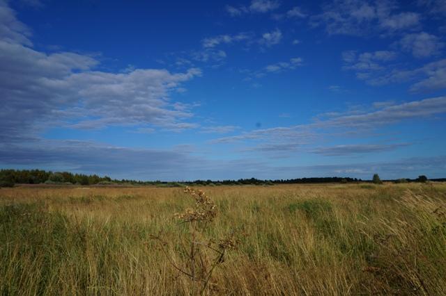 Жители говорят, что все эти поля раньше не были заброшенными. Шуерецкое. 10 августа 2016 г. Фото С. Кошкиной
