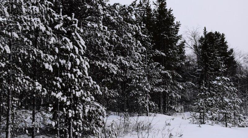 Как киндасовцы снег искали