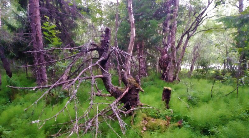 А лес такой загадочный….